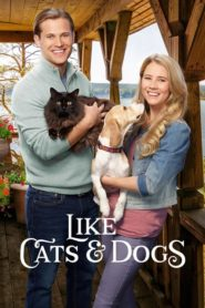 L'amour comme chiens et chats