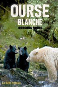 Ourse blanche oursons noirs : la belle histoire