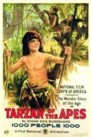Tarzan chez les singes