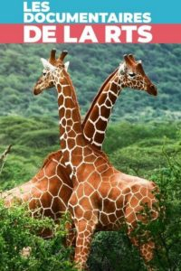 Maman girafe
