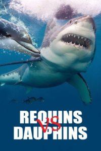 Requins Vs dauphins