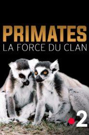 Primates La force du clan