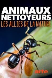Animaux nettoyeurs les alliés de la nature