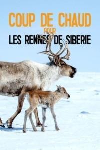 Coup de chaud pour les Rennes de Sibérie