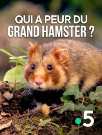 Qui a peur du grand hamster